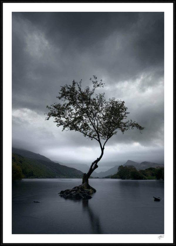lonely tree plakat